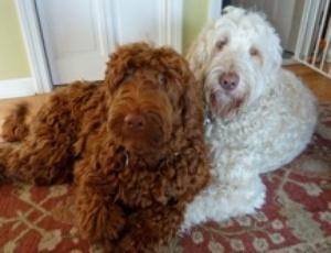 Maggie and Winnie 1 Jan 1, 11