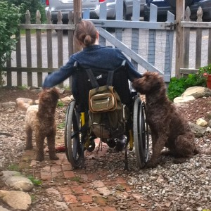 Therapy and Companion Dog