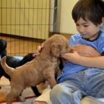 _Puppy buddy's littlest  buddy